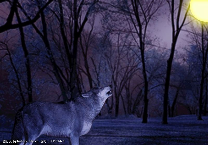 合成黑暗中的狼图片