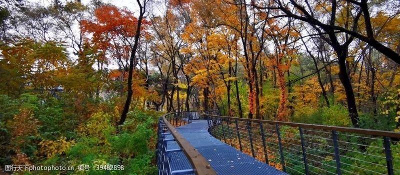 意境枫林桥图片