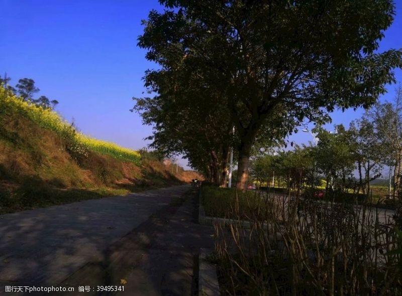 道路蓝天树木风景图片