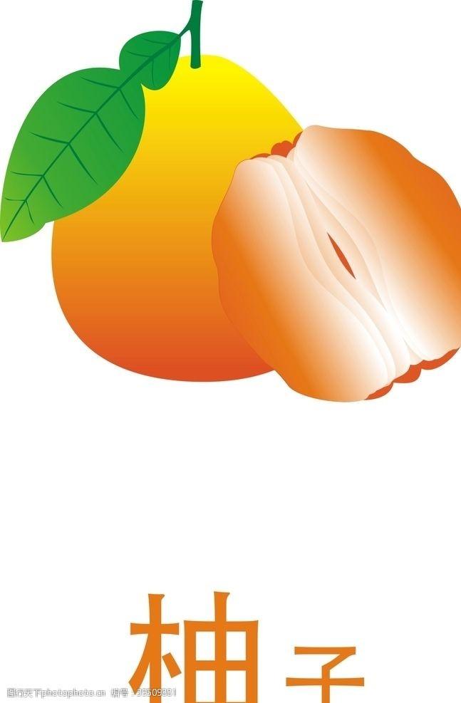 中秋柚子矢量图图片