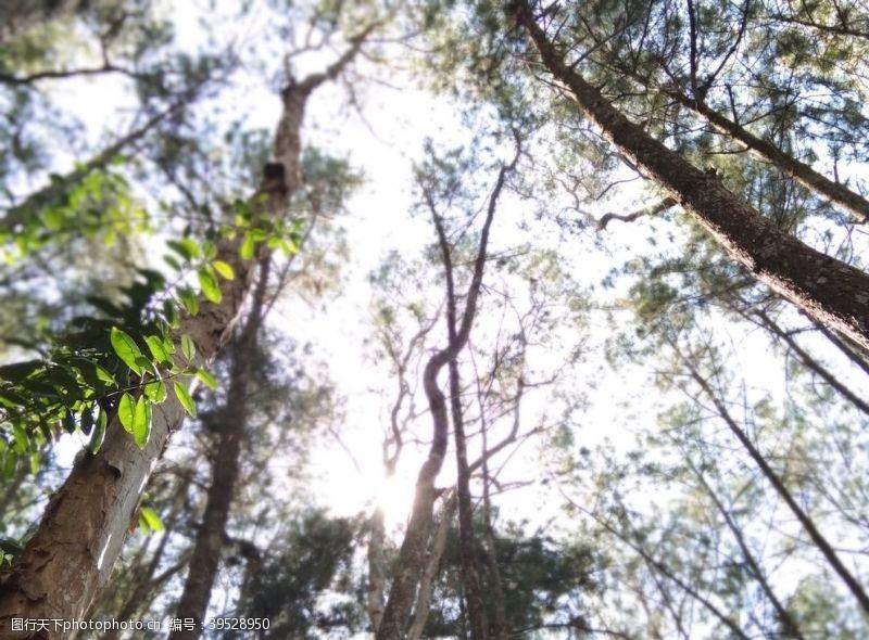树林丛林图片