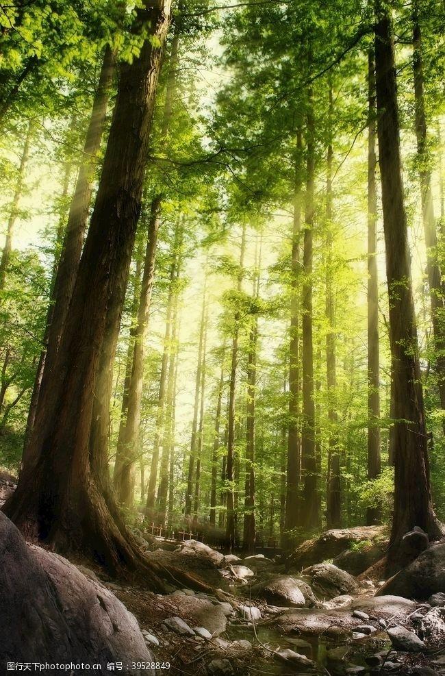 空气清新的树林图片