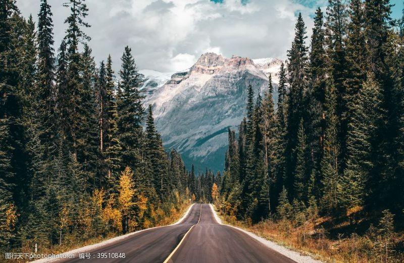 森林道路公路树林背景海报素材图片