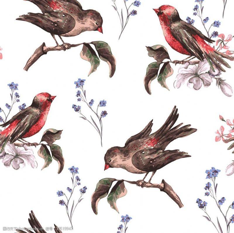 小鸟插画手绘花卉小鸟图片