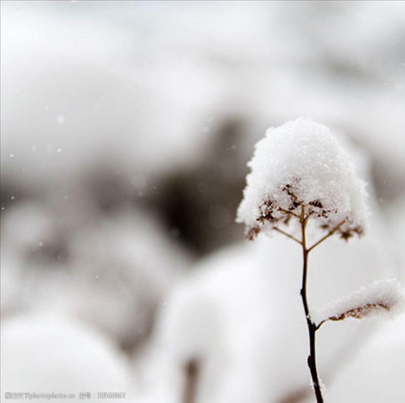 轮子雪花冬天植物纯洁生命图片