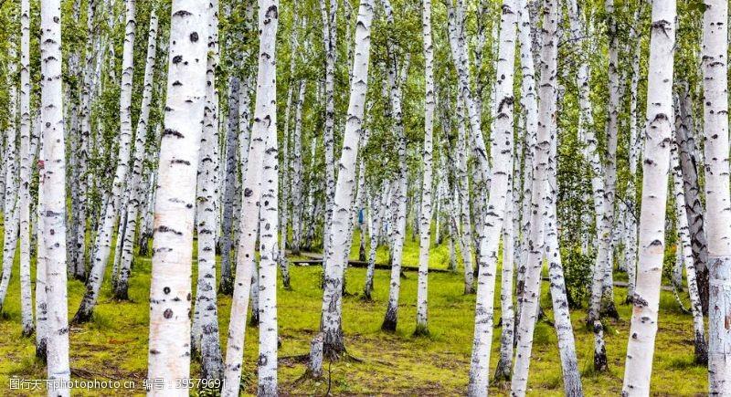 边境树林图片