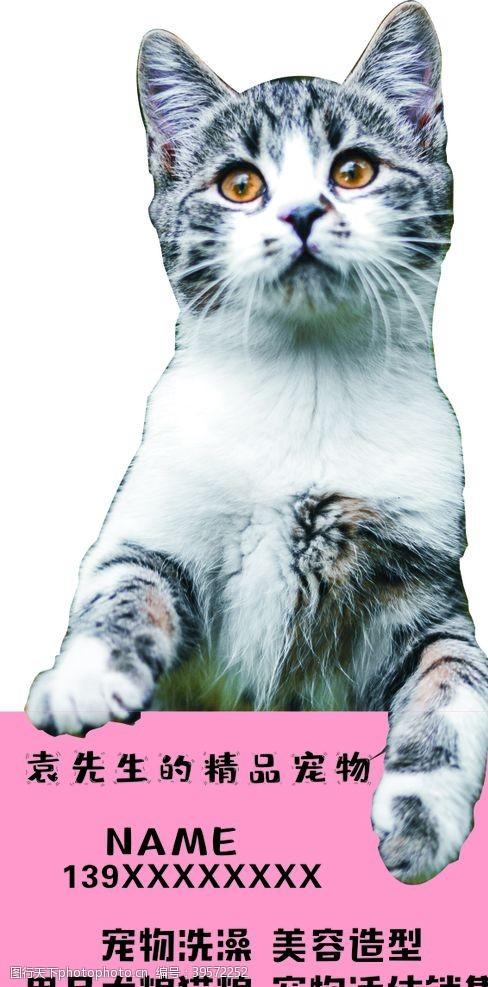 宠物名片卡片图片