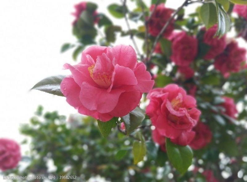 其他生物大红花花图片