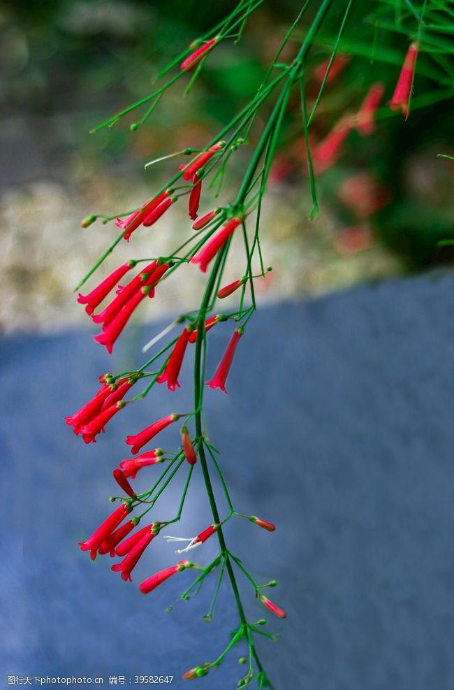 其他生物小红花图片