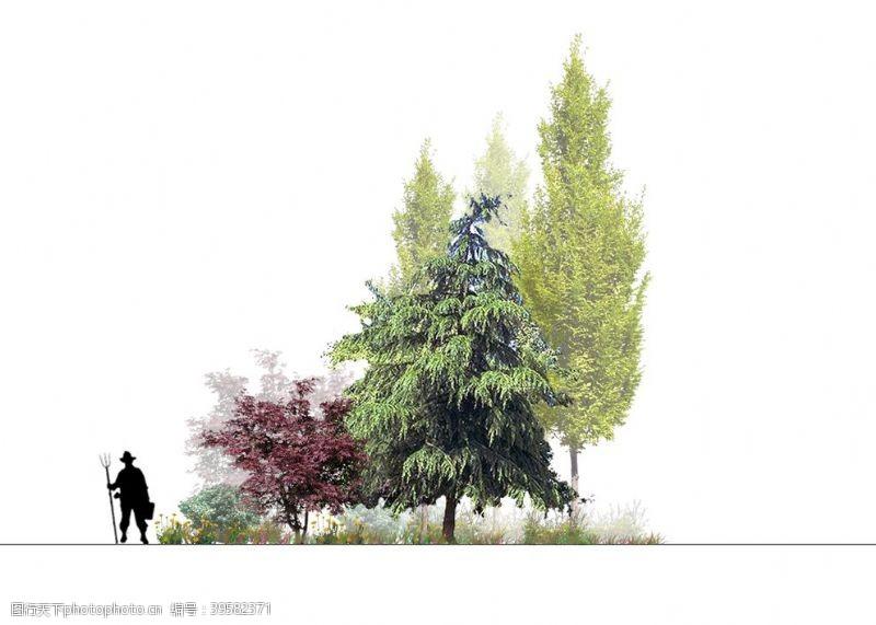 psd文件植物图片