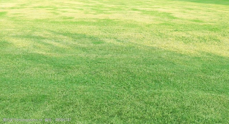 绿茵场草地背景图片