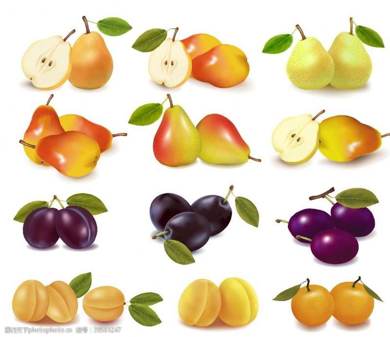 鸭梨新鲜水果矢量图片