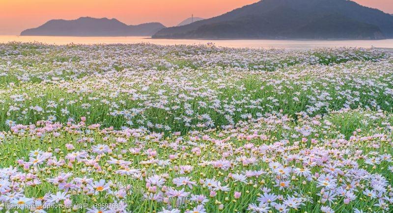 温馨图片山河野花春天早晨图片