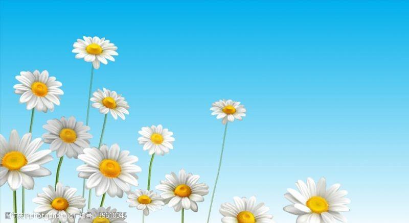 绿色清新背景雏菊图片