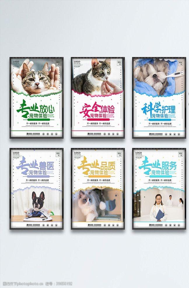 宠物美容宠物海报图片