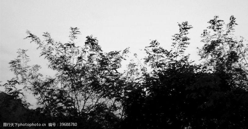 植物剪影树影图片