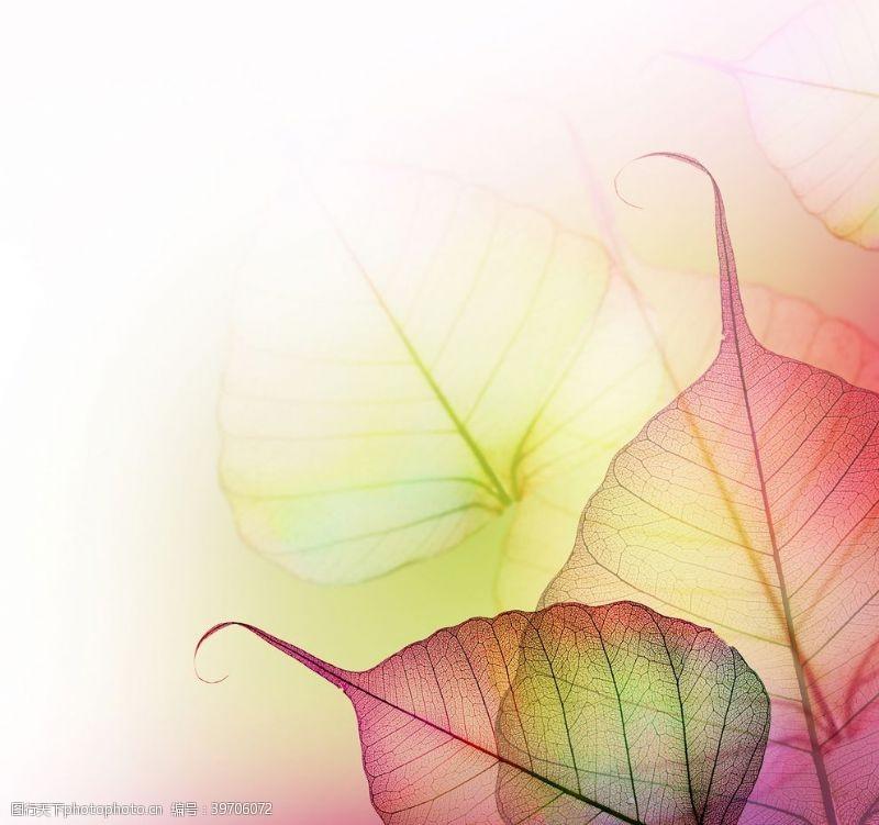 新品上架水彩叶子图片