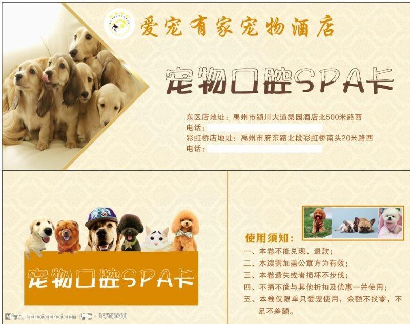 宠物卡片宠物口腔SPA图片