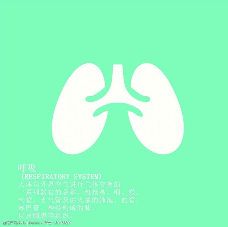 消化呼吸图片