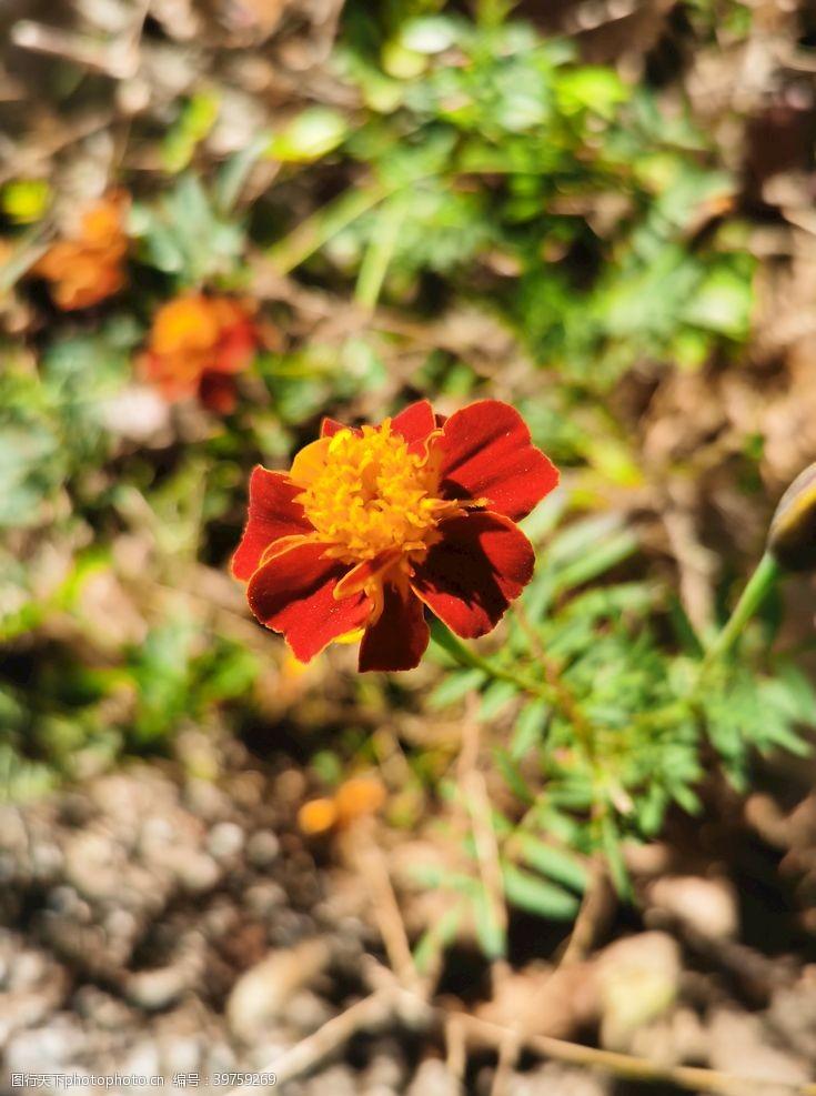 大红袍野花图片