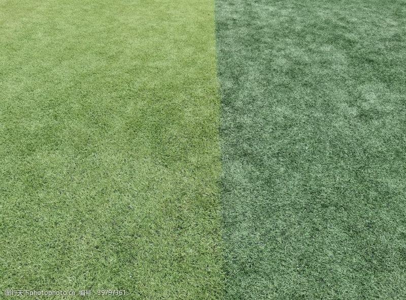 足球场草坪绿色草皮球场图片