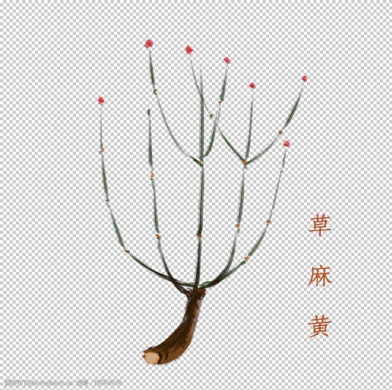 png元素草本植物图片