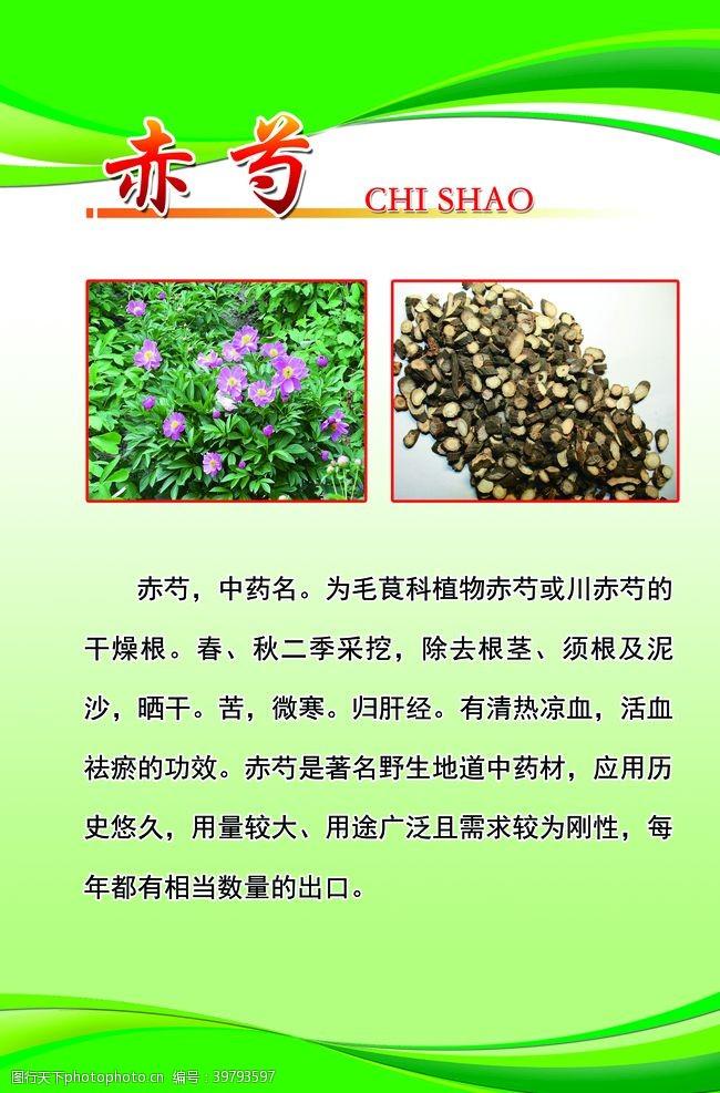 中国风边框赤芍图片
