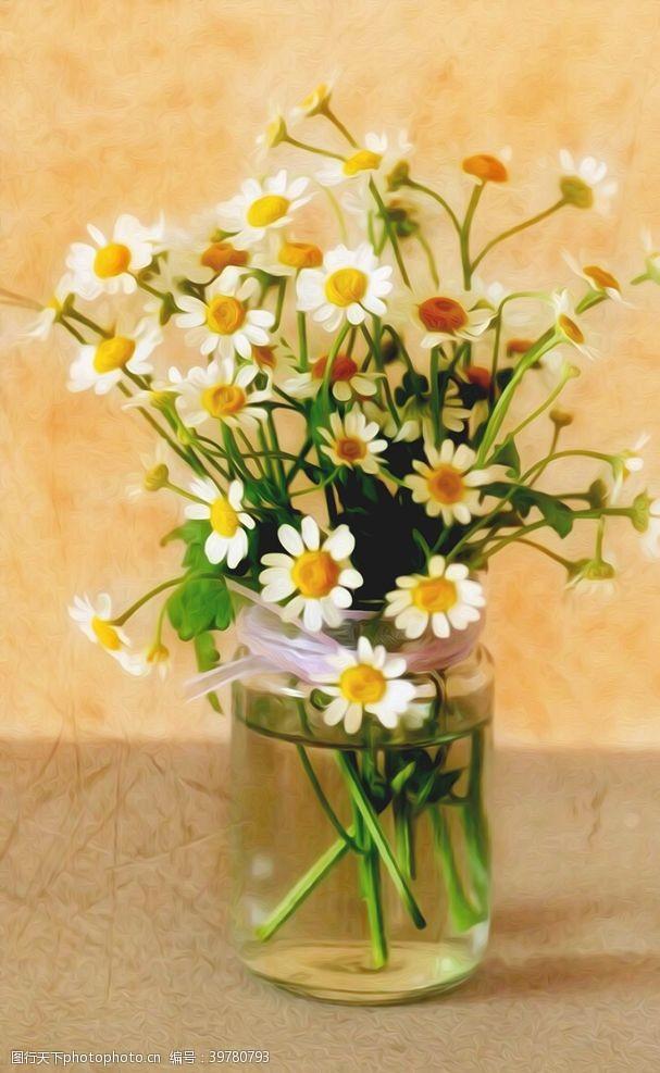 仙人掌雏菊图片