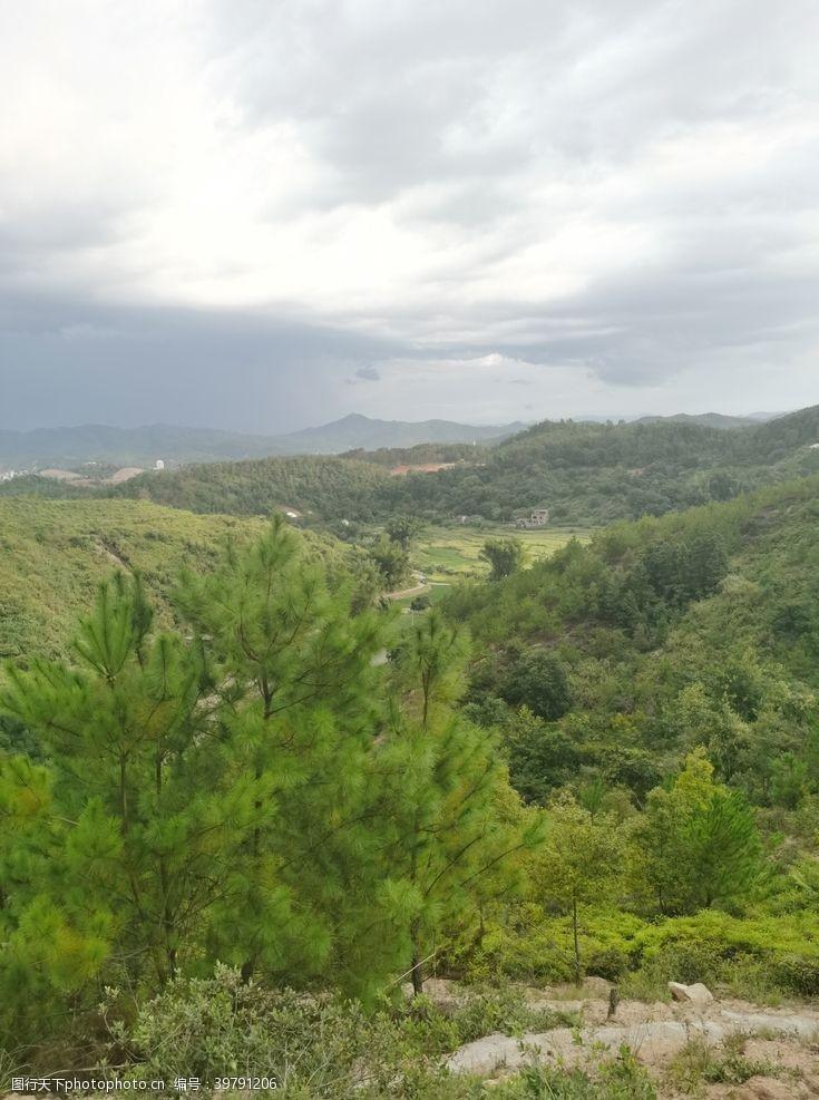 爬山南方松树林景色图片