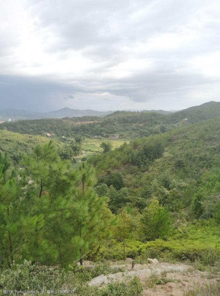 爬山松树林图片