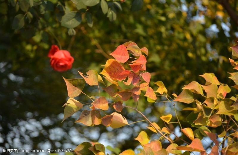 深秋秋天的树叶图片