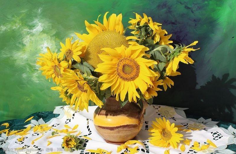 花蕊向日葵图片