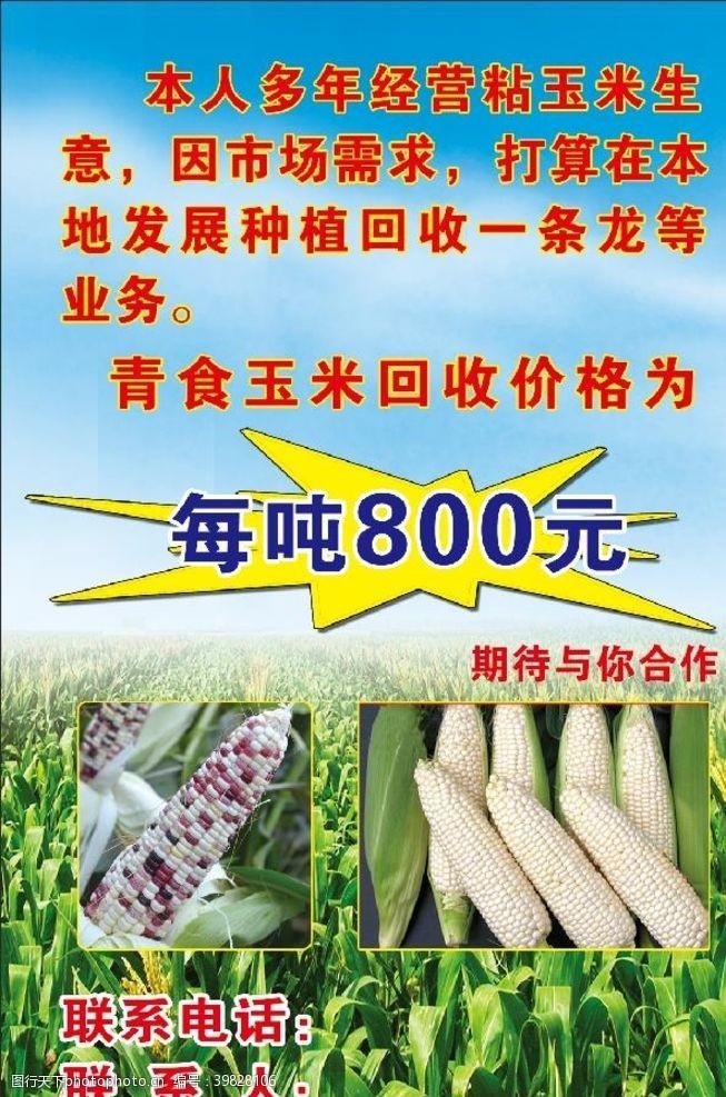 背景玉米地海報圖片
