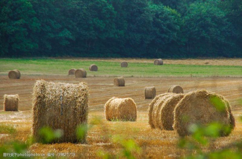 乡村干草垛图片