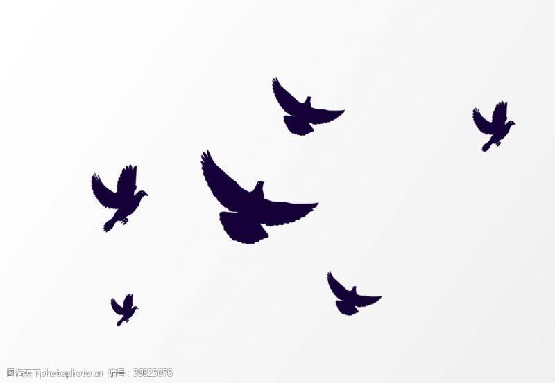 飞鸽鸽子图片
