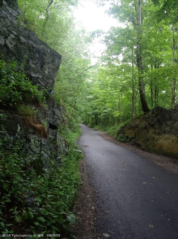 旅游风景森林风景图片