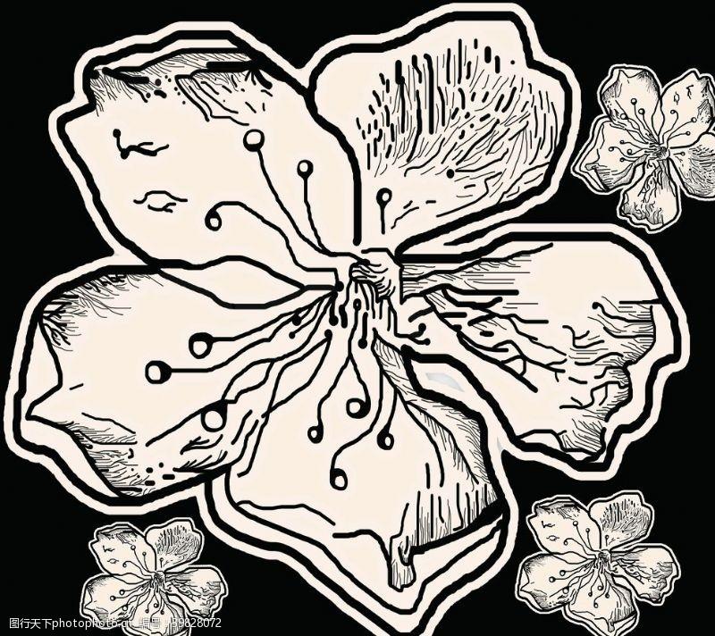 裝飾線條植物花朵圖片