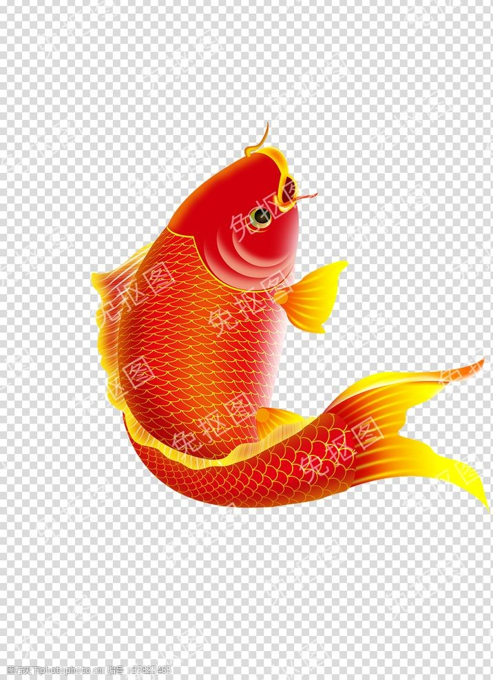 鲤鱼中国风古典素材高清PNG免抠图片