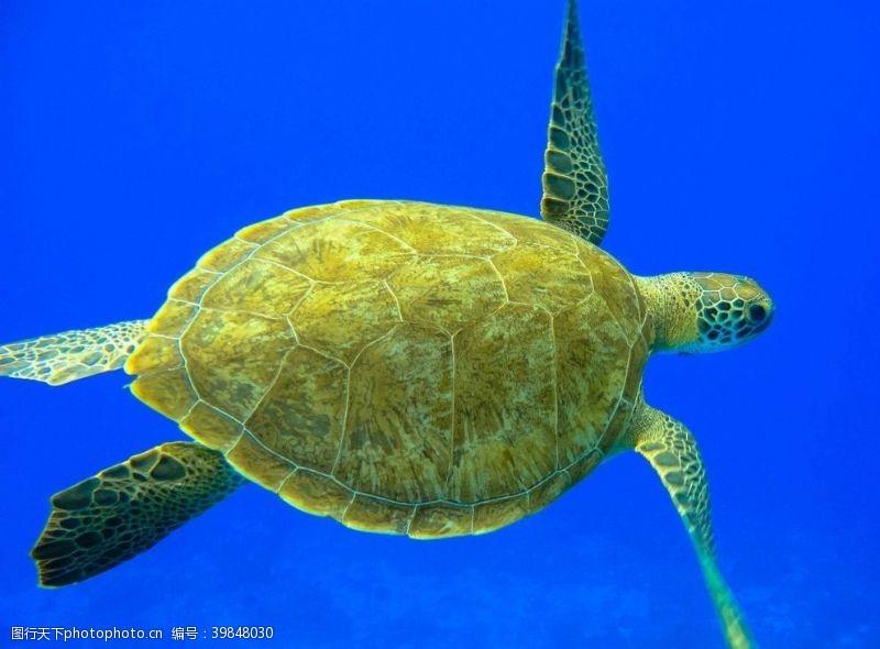 海洋海龟图片