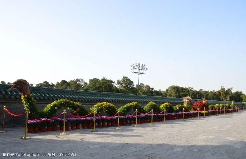 天坛菊花图片