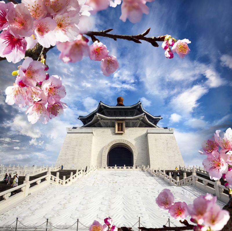 白色樱花樱花图片