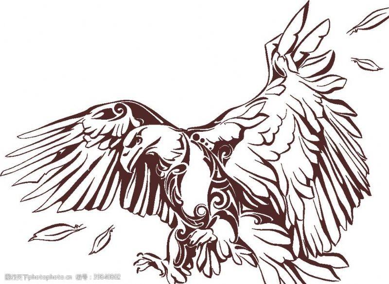 雄鹰鹰矢量图图片