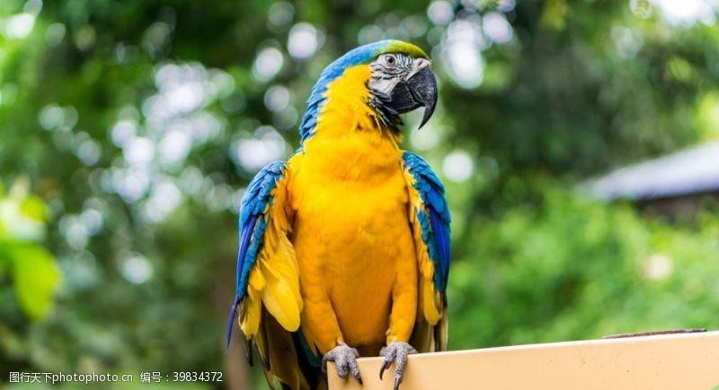 动物园金刚鹦鹉图片