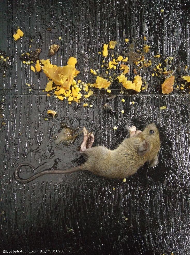 老鼠卡通老鼠图片