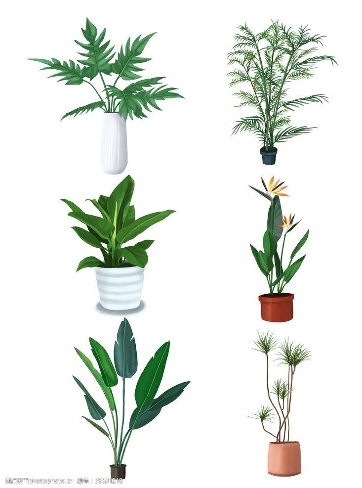 盆栽元素图片