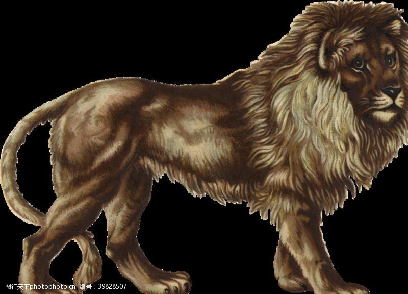 野生动物狮子图片
