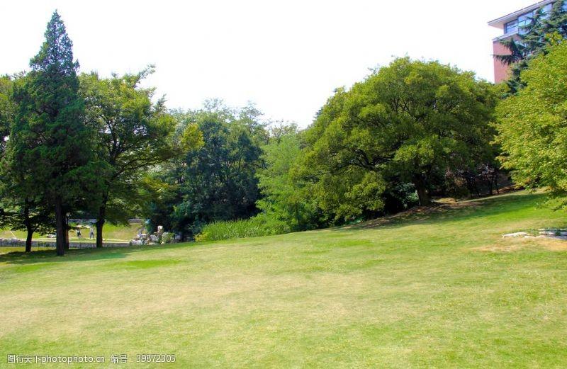 草地树林草坪图片