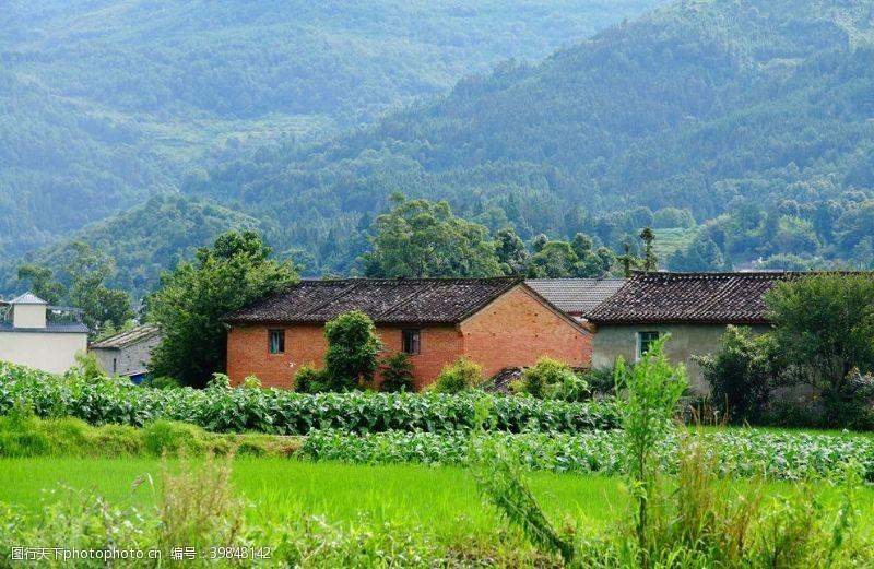 农村田园图片