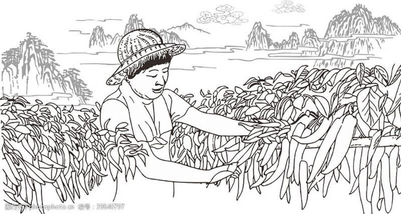 污染原生态辣椒图片