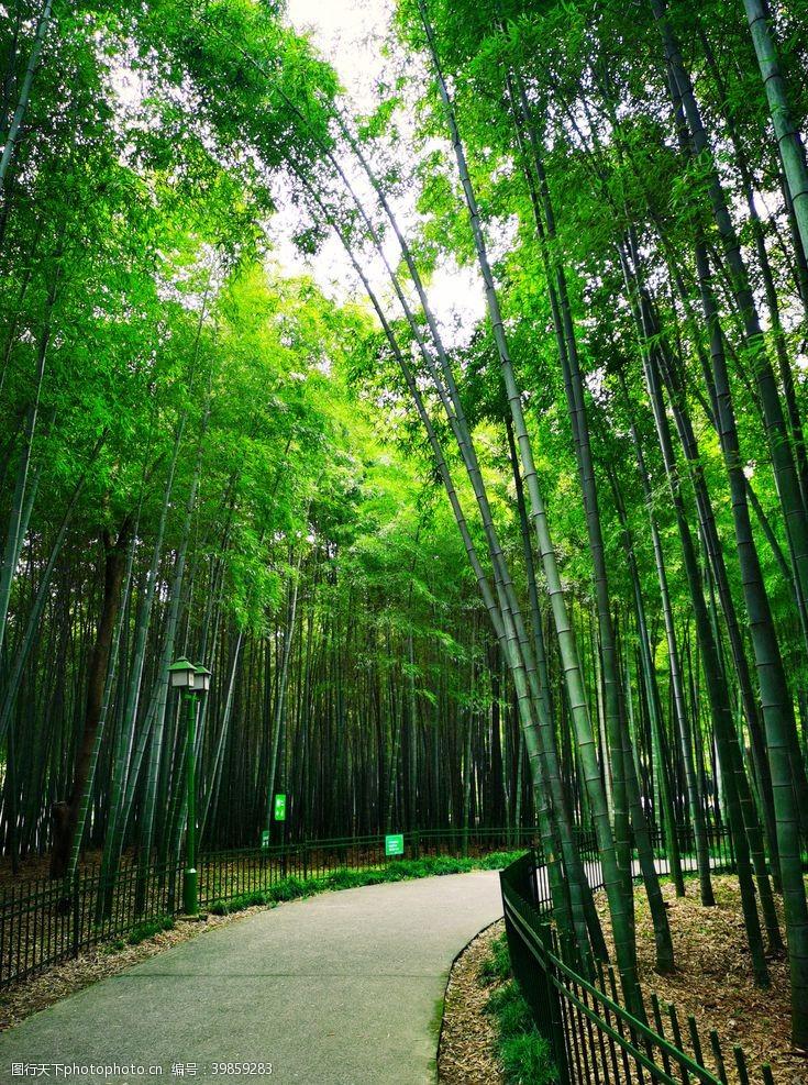 岳飞杭州西湖竹林一片图片